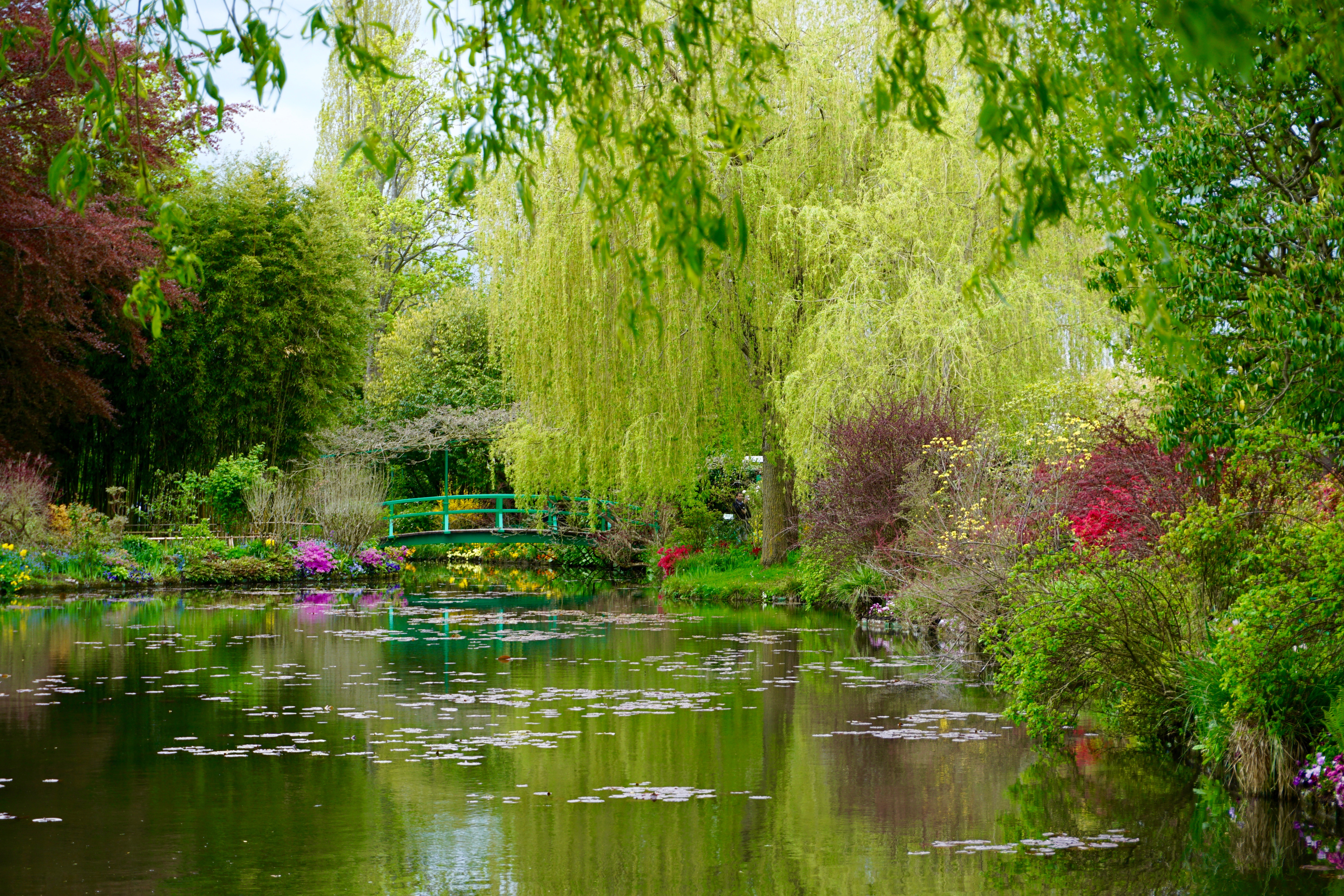 thee actual lily pond, inspiration for the painting