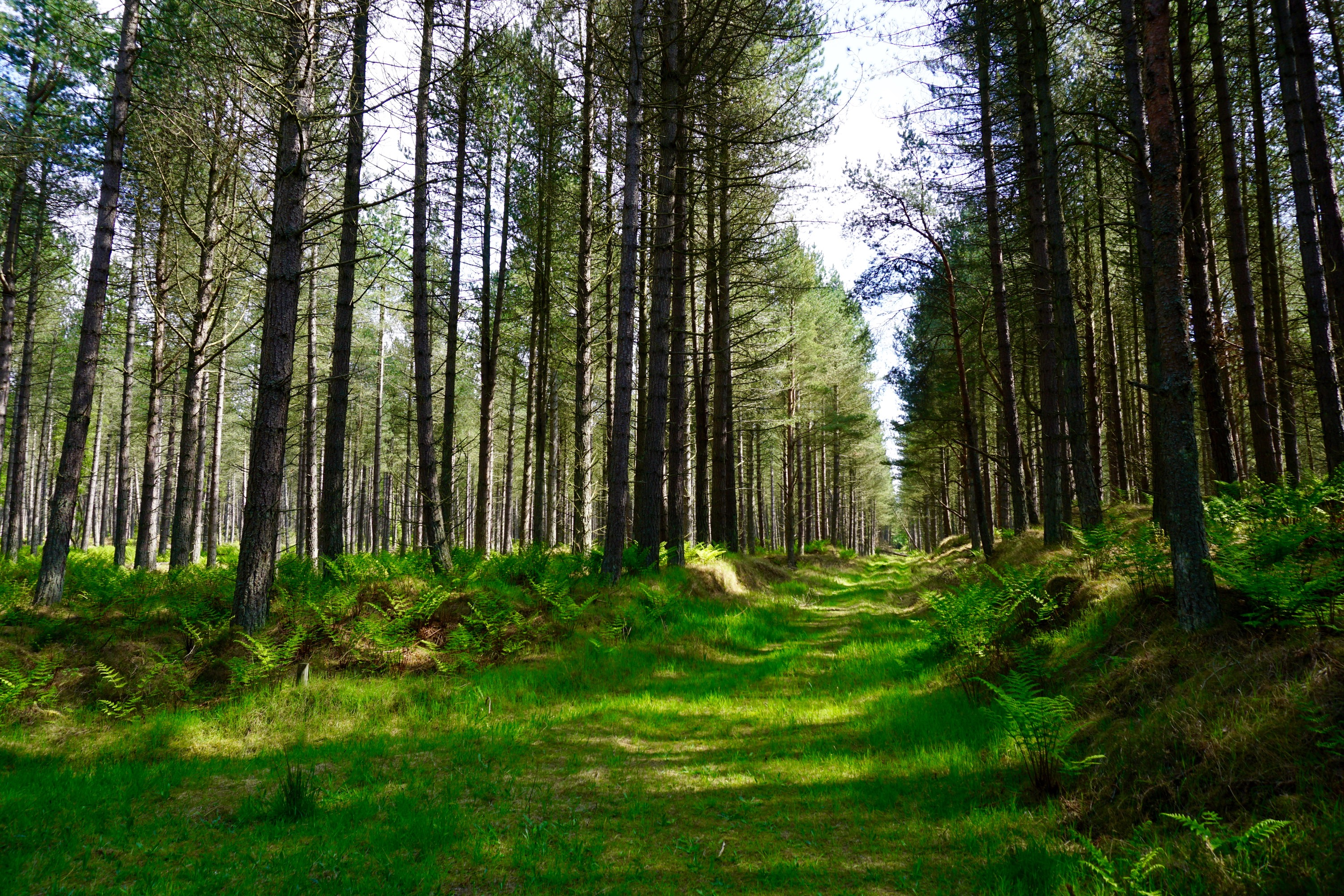 our stroll through the Scottish forest