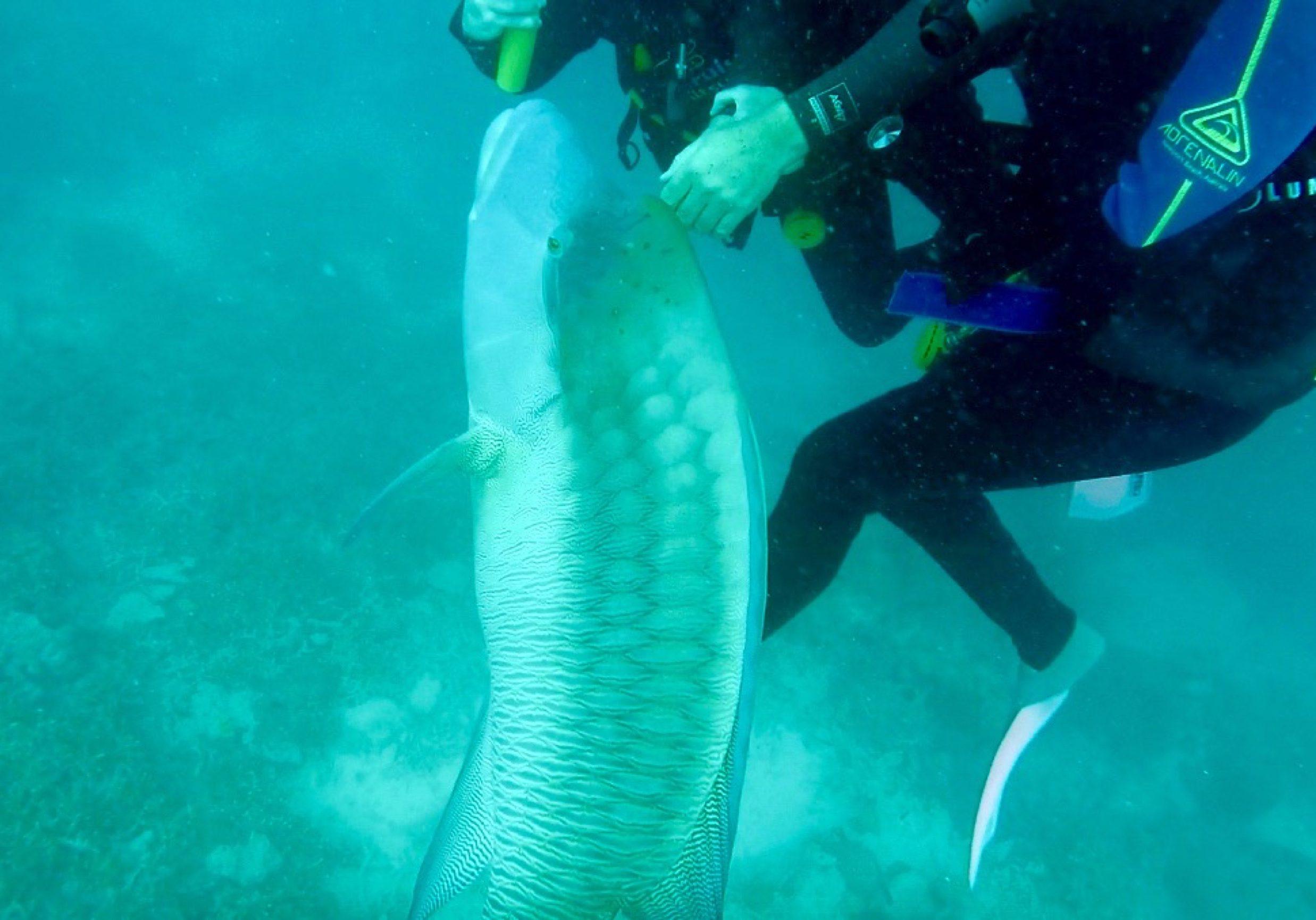 big fish encounter